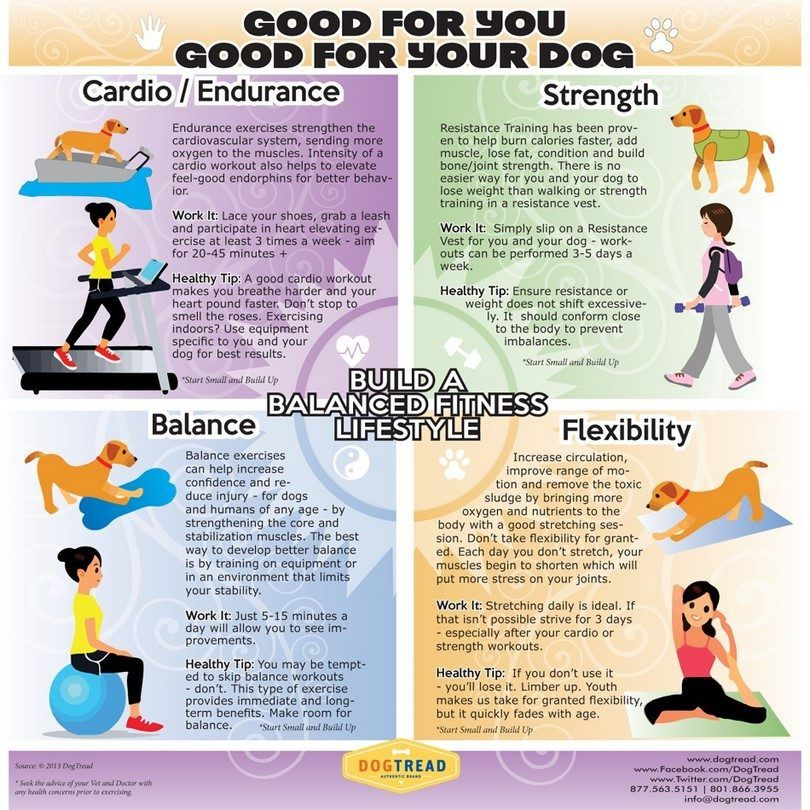 El ejercicio para su perro