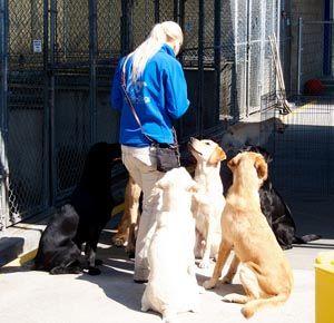 La certificaciГіn de entrenador de perros: una guГa para principiantes - Coach Trainer