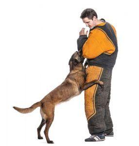 salarios de gama mГЎs alta de los entrenadores de perros