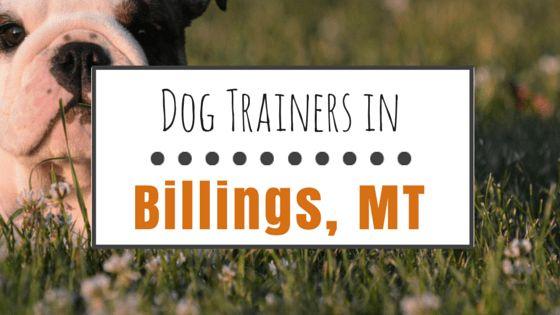 El entrenamiento del perro en billings, mt: 8 opciones sólidas