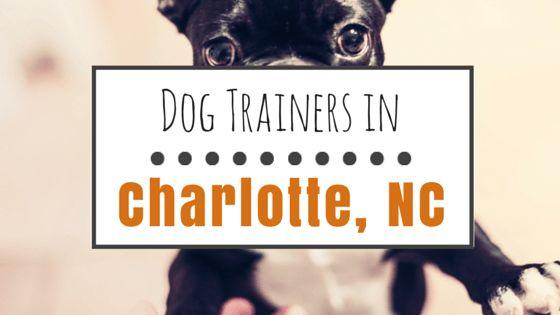 El entrenamiento del perro en charlotte, carolina del norte: 10 grandes opciones y mapas para ayudar a llegar allí