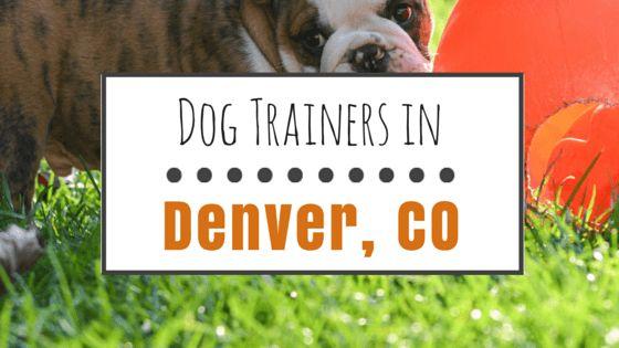 El entrenamiento del perro en denver: ¿cuáles son mis opciones?