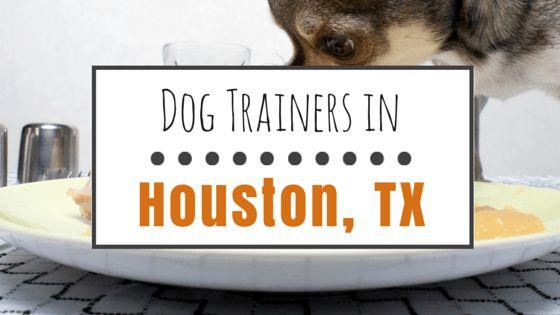 El entrenamiento del perro en houston: 8 grandes profesionales