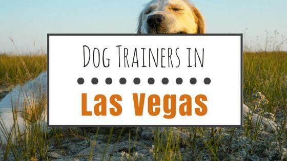 El entrenamiento del perro en las vegas: 7 de las mejores instalaciones