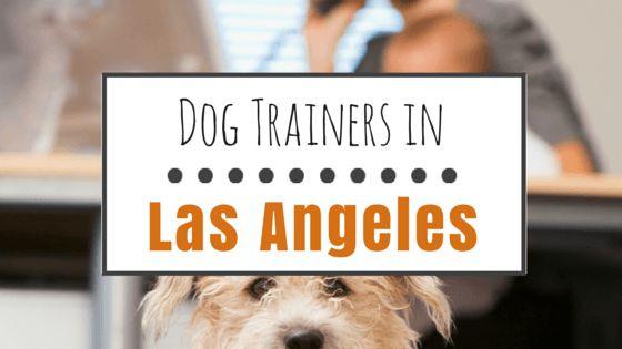 El entrenamiento del perro en los ángeles: los mejores instructores y clases