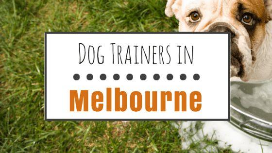 El entrenamiento del perro en melbourne, fl: las mejores selecciones