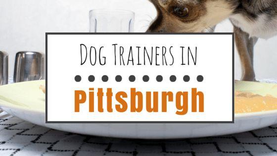 El entrenamiento del perro en pittsburgh: 10 buenos entrenadores basados en recompensa