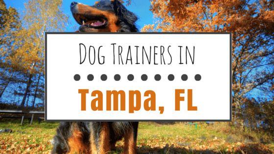 El entrenamiento del perro en tampa: 9 grandes opciones