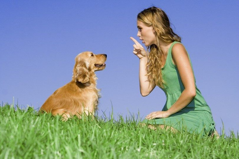 Obediencia del perro trining