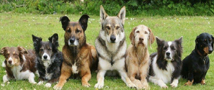 Los perros entrenados