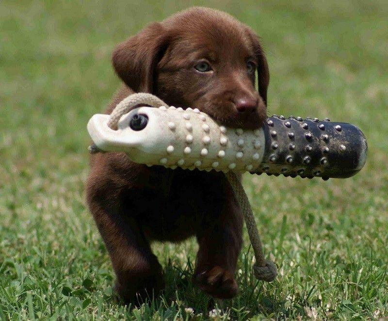 entrenamiento del perrito