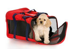 Viaje del perro 101 cómo enviar un Perro - Carrier