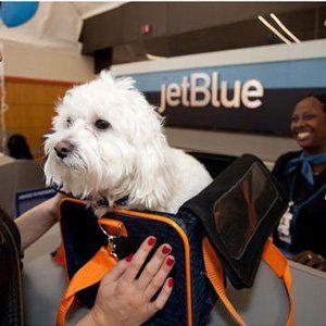 Viaje del perro 101 cómo enviar un perro - Aerolíneas
