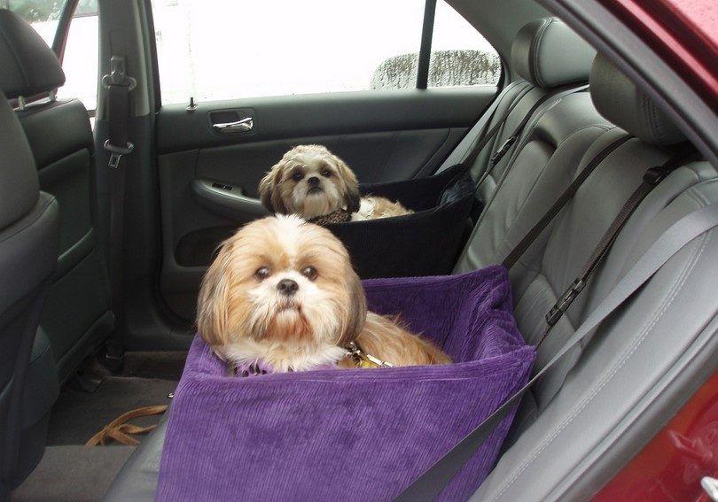 Los perros largo viaje