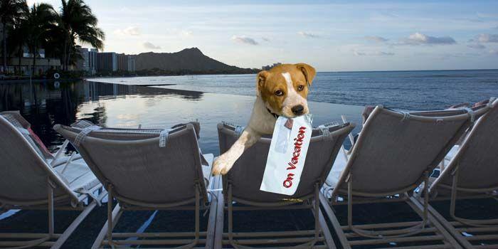 perro de vacaciones en un hotel