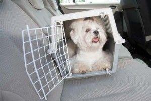 recorrido del perro en un coche en una caja de perro