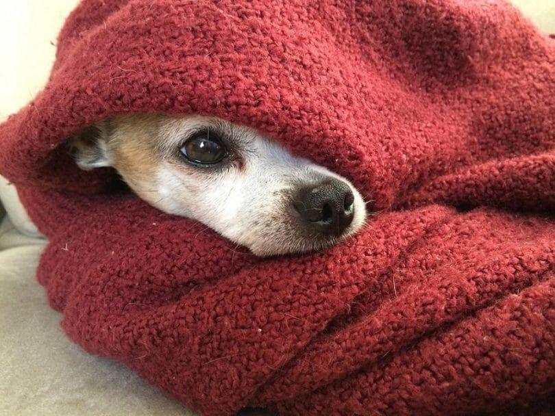 Mi perro es frío, y la tuya ..