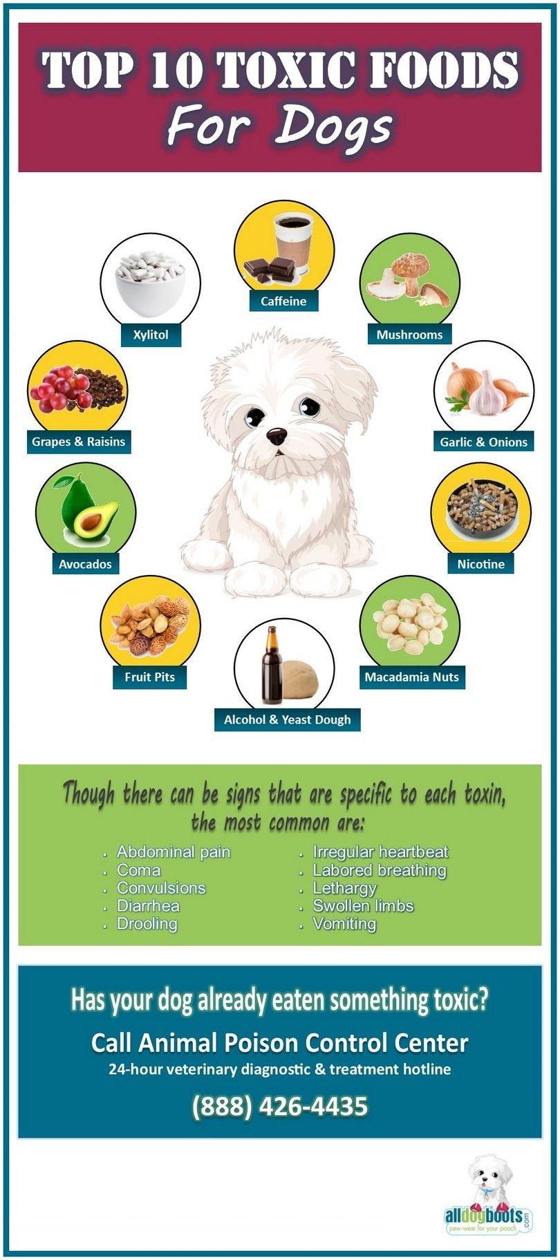 alimentos tóxicos perros