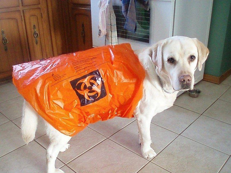 Peligro en el estГіmago del perro