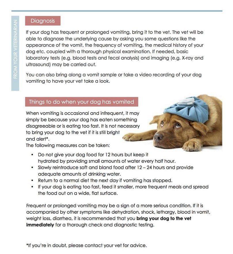 Vómitos en los perros infogrpahic dos