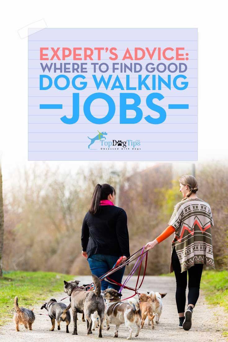 Perro Walker Empleo - Dónde y cómo encontrar trabajo Good Dog Walking