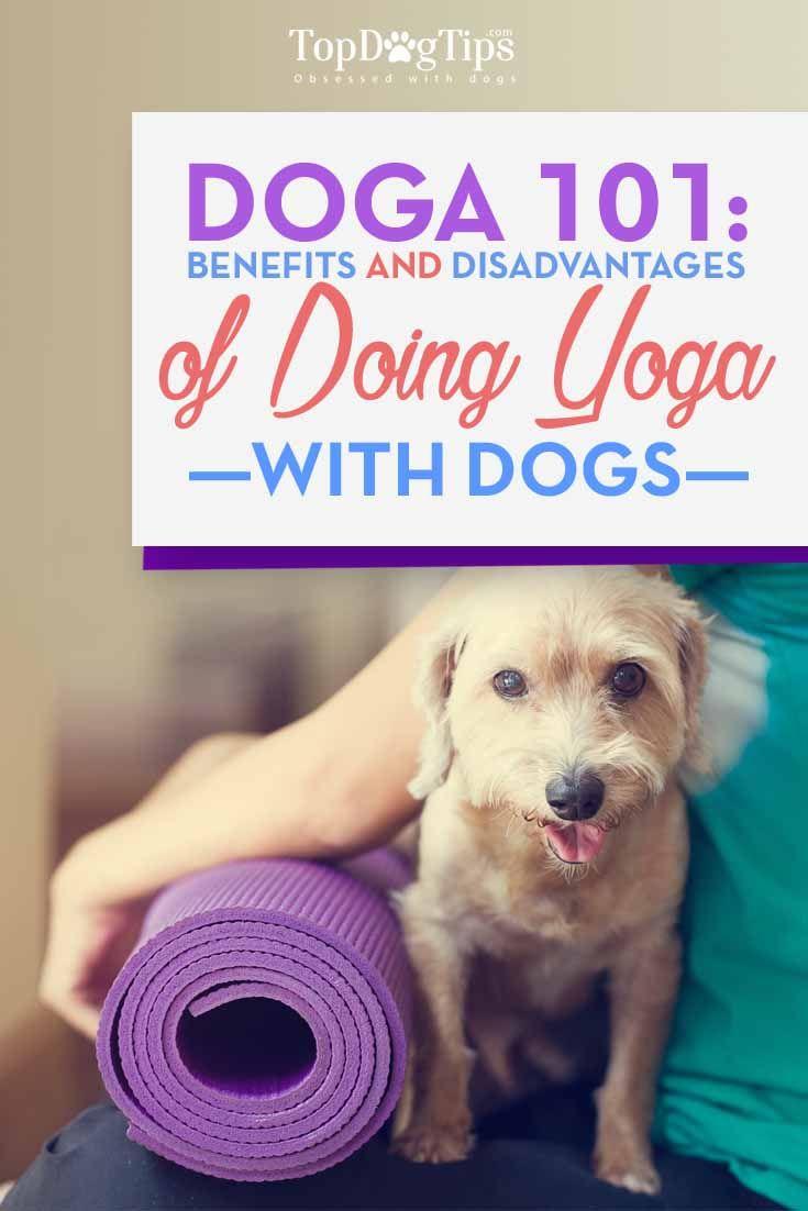 Doga 101 - Beneficios y precauciones necesarias para hacer yoga Perro