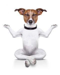 Lo que es Doga - Yoga con perros