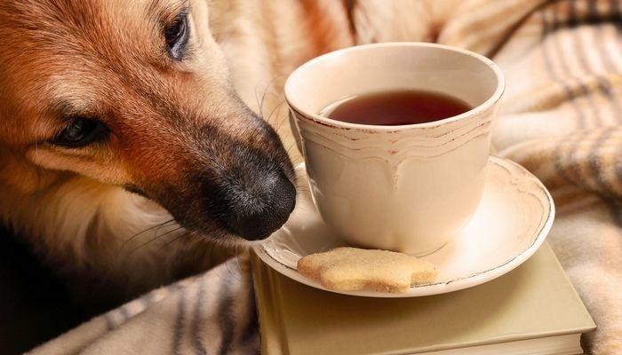 Tea Party perrito atrae a cientos