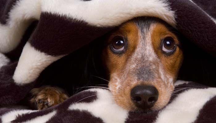 Los perros y los fuegos artificiales - podemos tener las dos