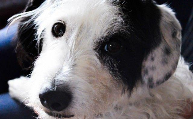 Misteriosamente perros estГЎn desapareciendo en el condado de Wise Tejas