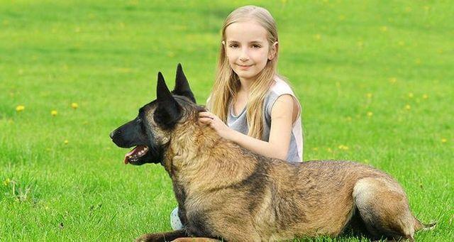 Perros salir al rescate de los niños