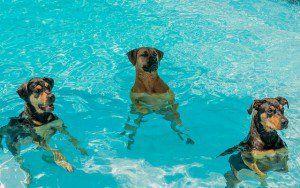 Los perros en piscinas - ¿Por qué la natación es buena para su mascota