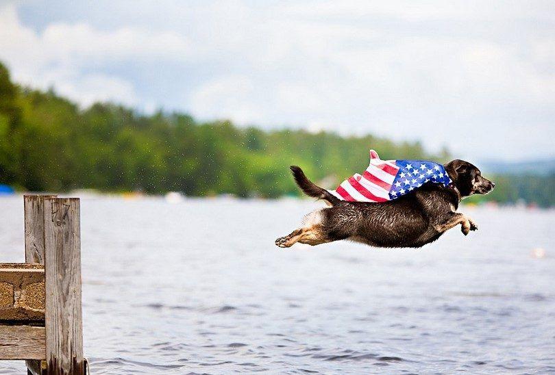 Perro volando en EE.UU.