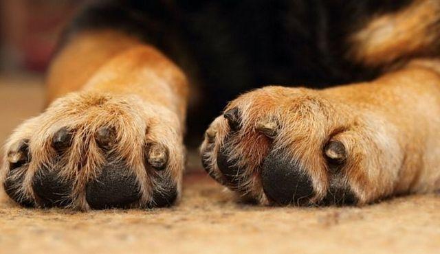 (No) darle una mano: cómo dejar a su perro de pawing