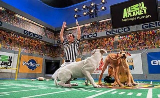 Don`t Miss Today`s Super Bowls for Dogs and Cats!