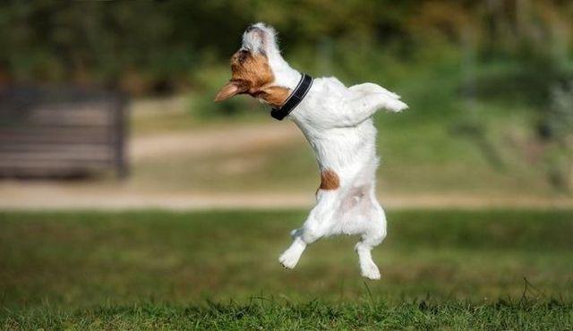 Niño en el suelo: el entrenamiento de su perro con un arnés ningún salto