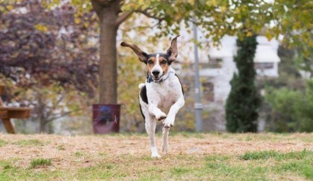¡Abajo! Cómo detener inapropiado perro salto