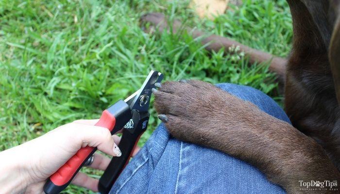Dremel vs Safari vs. Epica: Mejor cortauГ±as para mascotas en Perros ComparaciГіn & amp; revisiГіn