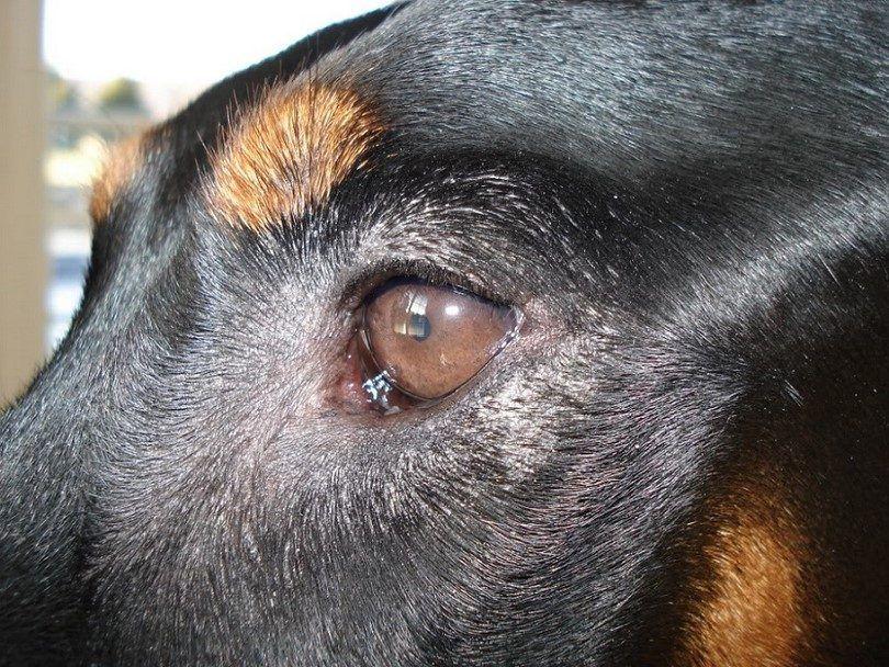 La piel seca alrededor de los ojos