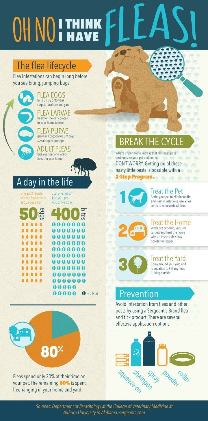 Las pulgas infografía