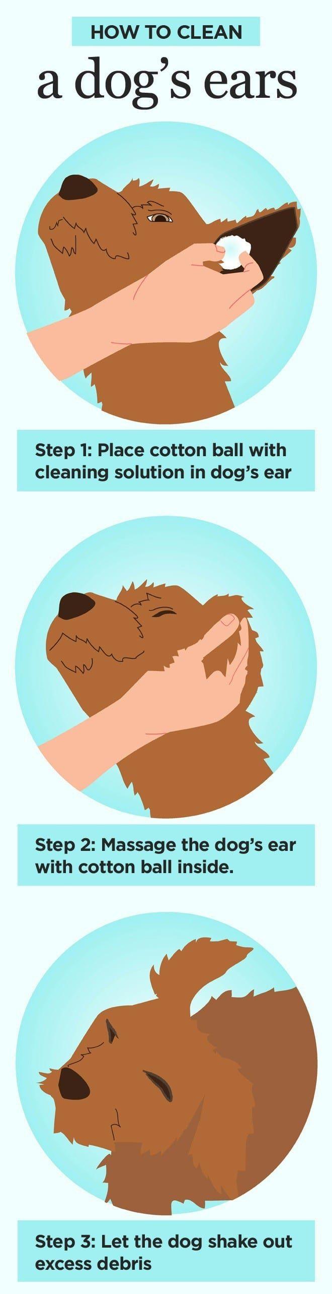 Cómo limpiar los oídos de los perros