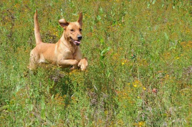 Las ideas favorables a la tierra para los dueños de perros