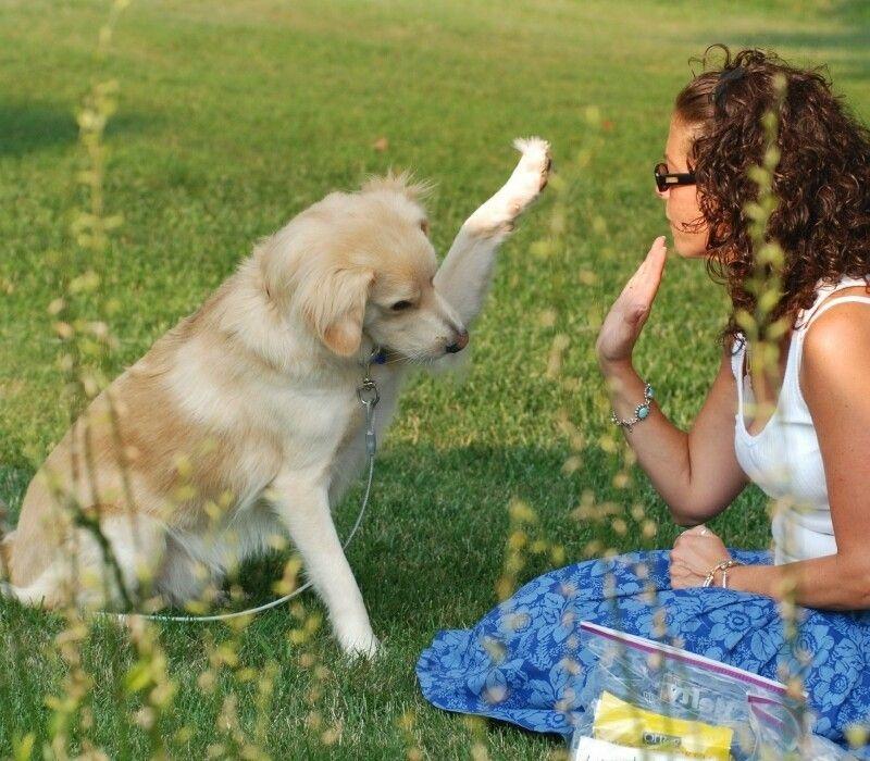 Cómo entrenar a su perro