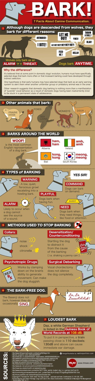 Perro de la corteza-infografía