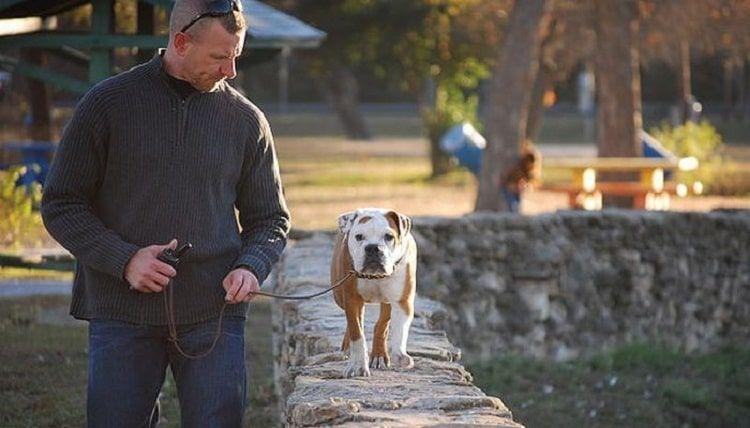 Electronic collares del entrenamiento del perro