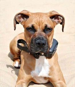 Modo de empleo electrГіnica del entrenamiento del perro Collares