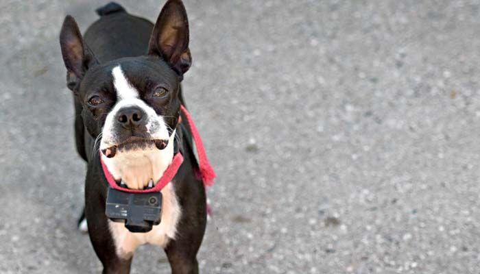 Contemplar la utilizaciГіn de los mejores collares de adiestramiento para perros