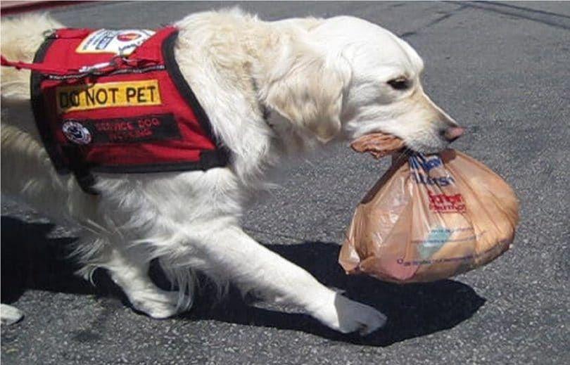 Perro de Servicio ayudar