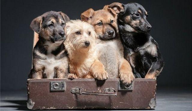 Perro esencial gobierna cada propietario debe vivir de acuerdo