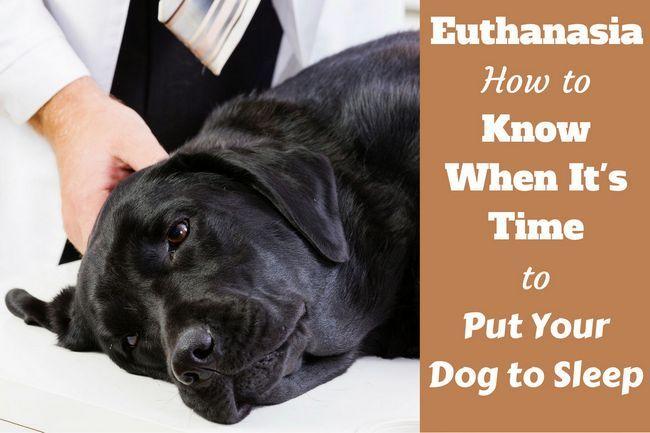 cuГЎndo poner a su perro por escrito al lado de un labrador que duerme pacГfico en un veterinario`s table
